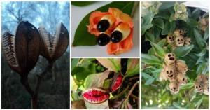 მცენარეები, რომელთაც ყველაზე უცნაური თესლი და ნაყოფი აქვთ