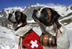 პირველად, საქართველოს სამთო-სათხილამურო კურორტებზე გაწვრთვნილი მაშველი ძაღლები ზვავში დაშავებულების გადასარჩენად