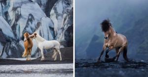 ცხენების 20 თვალწარმტაცი სურათი ისლანდიის პეიზაჟებში, რომლებიც სუნთქვას შეგიკრავთ