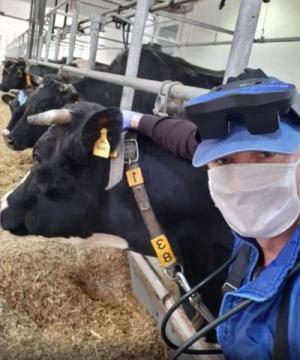 ძროხებს შეუძლიათ  კაცობრიობა  პანდემიისგან გადაარჩინონ
