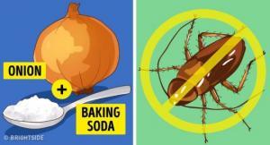 როგორ მოვაშოროთ ტკიპები, კოღოები და მწერები სახლიდან? მარტივი და იაფი საშუალება