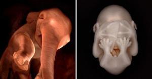როგორ გამოიყურებიან ცხოველები დაბადებამდე - ეს ფოტოები ნანახი არ გექნებათ