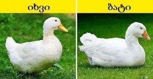 10 თითქმის იდენტური ცხოველი - როგორ გავარჩიოთ ისინი ერთმანეთისგან