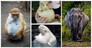 როგორ გამოიყურებიან ორსული ცხოველები - ფოტოები, რომელიც გულს გაგითბობთ!