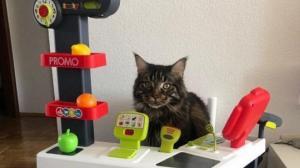 როცა სახლში კატა ცხოვრობს - თუ კატები არ გიყვართ, ფოტოების ნახვის შემდეგ აზრს შეიცვლით