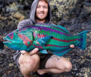 ულამაზესი თევზის სახეობები, რომლებსაც მეთევზე იაპონიის კუნძულებზე იჭერს და შემდეგ ისევ წყალში აბრუნებს