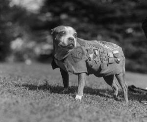 ძაღლი სახელად სტუბი - მაწანწალადან გმირამდე