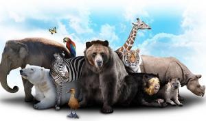 10 ძალიან საინტერესო ფაქტი ცხოველებზე