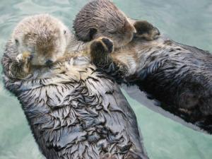 20 საინტერესო ფაქტი ცხოველებზე, რომლებიც კიდევ უფრო შეგაყვარებთ მათ