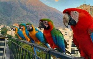 მოშინაურებული ცხოველები და ფრინველები სხვადასხვა ქვეყნებში, რომლებსაც მტრედების ,,ფუნქცია'' აქვთ