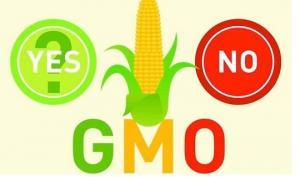 რა არის გენმოდიფიცირება და რას ნიშნავს გენმოდოფოცირებული პროდუქტი