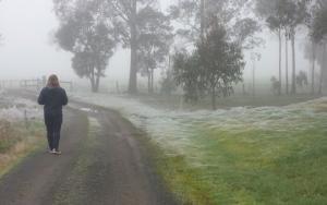 ავსტრალიაში ობობების სეზონი დაიწყო და ეს შემზერავად გამოიყურება