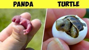 იშვიათი სილამაზის 5 ახალშობილი ცხოველი  და საინტერესო ფაქტები მათ შესახებ