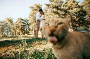 როდესაც კატები კადრს გიფუჭებენ, თუ პირიქით? მხიარული ფოტოკოლაჟი, რომელიც კარგ განწყობას შეგიქმნით