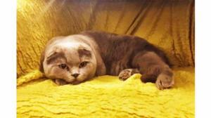 კატა, რომელიც სურვილებს ასრულებს 10 მილიონად იყიდება