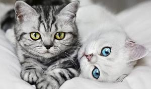 4 მიზეზი, თუ რატომ უნდა ვიყოლიოთ კატა სახლში  – დამტკიცებულია მეცნიერების მიერ