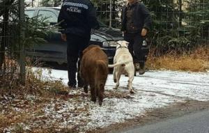 ტახი დაჟინებით ითხოვდა, რომ პოლიციას მისი ძაღლი დაებრუნებინა... მეგობრობის მომხიბლავი ისტორია.