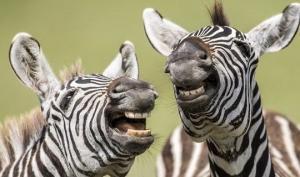 მხიარული  და სასაცილო სურათები ველური ბუნებიდან