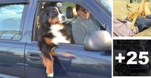 როდესაც ის შენთვის შინაურ ცხოველზე მეტია... (+22 ფოტო)