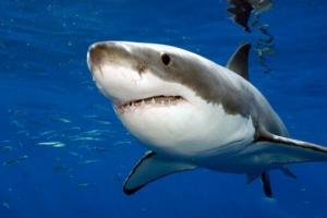 5 ადამიანი,რომელიც ზვიგენის თავდასხმას გადაურჩა