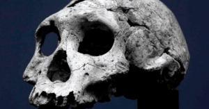 სამხრეთ აფრიკაში მეცნიერებმა ადამიანთა წინაპრების აქამდე უცნობი სახეობის ნაშთები იპოვეს.