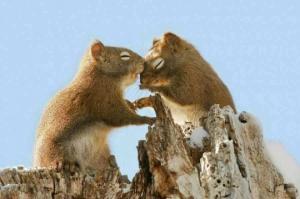 21 გულისამაჩუყებელი ფოტო, რომელიც ამტკიცებს, რომ სიყვარული ყველაფერზე ძლიერია