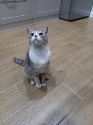 19 ჯადოსნური მტკიცებულება იმისა, რომ ყველა ადამიანს უნდა ჰყავდეს კატა(+საყვარელი მულანი)