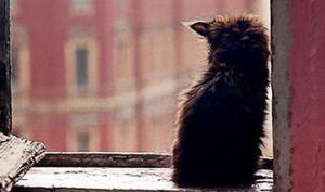 ყველაზე გულისამაჩუყებელი ისტორია კატაზე