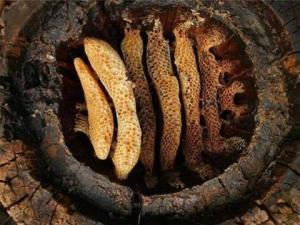 ბორჯომში, სოფელ საკირეში, ჩატარებული არქეოლოგიური გათხრების შედეგად, აღმოაჩინეს უძველესი თაფლი.