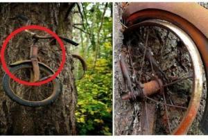ხეში გაჭედილი ველოსიპედის ფოტო, რომელიც ყველას გინახავთ, მაგრამ მისი რეალური ისტორია არ იცით