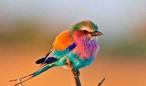 წარმოგიდგენთ 11 უნიკალურ ეგზოტიკურ ფრინველს, რომელთაც შესაძლოა, არ იცნობთ