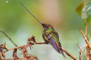 მათი ნისკარტის სიგრძე და ფორმა  გაგაოცებთ - 9  საოცარი ფრინველი