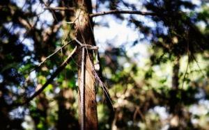 იცით თუ არა, რომ იაპონიაში თვითმკვლელთა ტყე არსებობს?!