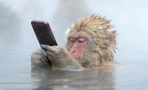 """ინდონეზიის მაიმუნების """"ბანდები"""",  წინასწარ განზრახული """"დანაშაულებრივი სქემით"""" მოქმედებენ"""