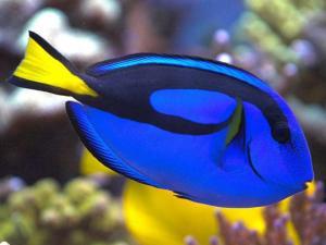 გარეგნობამ არ მოგატყუოთ, ეს თევზი  ძალიან  საშიშია