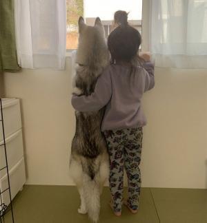 თუ ამ ფოტოების ნახვის შემდეგ კვლავ ჩათვლით რომ თქვენს შვილს ძაღლი არ სჭირდება, მაშინ კატა ყოფილხართ....