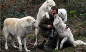 ცნობისმოყვარე ცხოველები, რომლებიც ფოტოგრაფებს მუშაობაში ხელს უშლიან