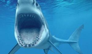 ცხოველი, რომელსაც არა 32, არამედ 20 000-მდე კბილი აქვს