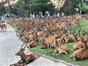 ირმების პარკი - საოცარი ადგილი ცხოველების მოყვარულთათვის