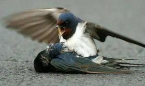 მეგობრის გლოვა - ეს საოცარი ისტორია დაგარწმუნებთ, რომ ფრინველებსაც აქვთ გრძნობები