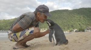 პინგვინი 8000 კმ. ცურავს ყოველ წელს მეგობრის მოსანახულებლად, რომელმაც სიკვდილს გადაარჩინა