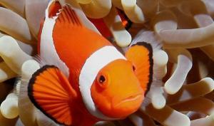 """""""ჯამბაზი"""" - თუ აკვარიუმისათვის თევზს ეძებთ, იგი საუკეთესო ვარიანტია"""