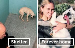 გამაოგნებელი შედეგები - ძაღლები თავშესაფარში და თავშესაფრიდან სახლში