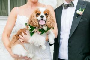 საყვარელი ძაღლები საქორწილო ფოტოებზე