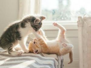 საშინელი დაავადება, რომელიც ადამიანებზე კატებიდან გადადის