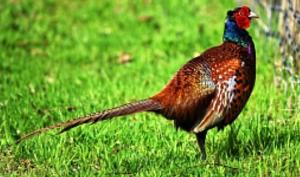 უკრაინელ ცოლ-ქმარს  ხოხბების ფერმა აქვს - იცით, რა ღირს ფრინველის  ბუმბული და  კვერცხი?