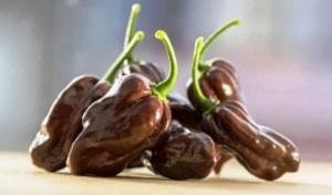 კანადელმა გენეტიკოსებმა შექმნეს ტკბილი წიწაკის ახალი ჯიში,რომელსაც შოკოლადის გემო და ფერი დაჰკრავს