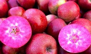 """იტალიურმა კომპანიებმა  ახალი ჯიშის ვაშლი """"Red Moon"""" გამოუშვეს - ნახეთ, რითი გამოირჩევა იგი"""