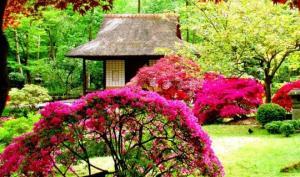 3 ცნობილი იაპონური ბაღი, რომლის სილამაზეც დაგატყვევებთ