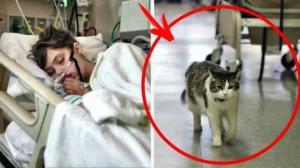 """კატა """"ოსკარი"""" - სიკვდილის წინასწარმეტყველება"""
